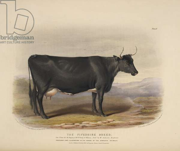 The Fifeshire Breed