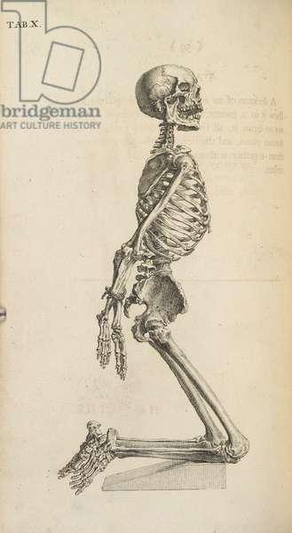 A human skeleton in a kneeling position.