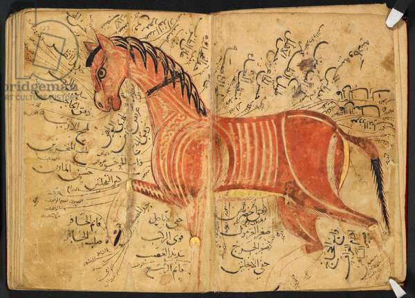 Horse, from 'Kitāb al-bayṭarah' by Azdī, Aḥmad ibn ʿAtīq, 1223 (parchment)