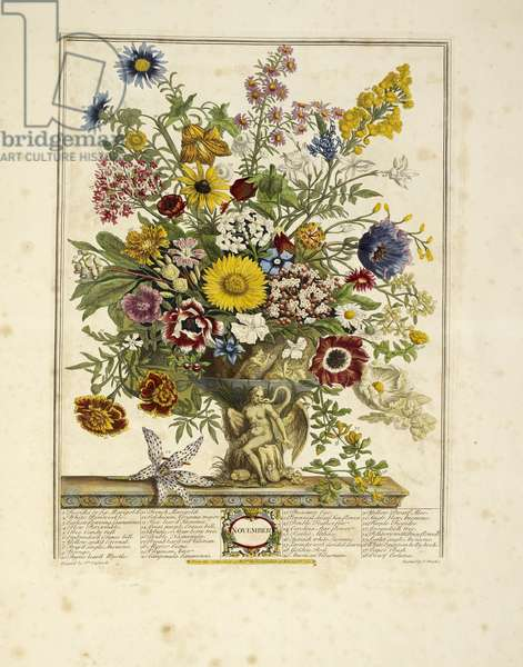 Various flowers (November)
