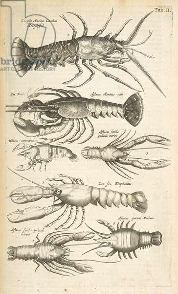 Tab II, Lobsters, Illustration from from 'Historiæ naturalis de quadrupetibus', 1657 (engraving)