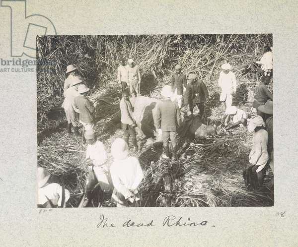 The Dead Rhino, 'Curzon Collection: Album of snapshots, principally relating to Lord Curzon's time as Viceroy of India', April 1900 (b/w photo)