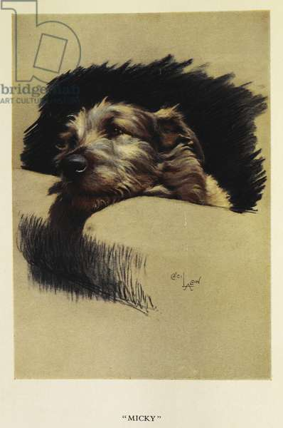 'Micky'. A portrait of a dog, a terrier, 1927 (colour litho)