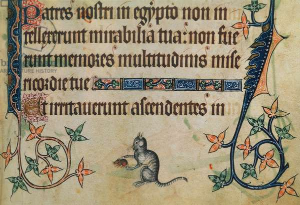 Add 42130 f.190 A domestic cat playing with a mouse, from the 'Luttrell Psalter', c.1325-35 (vellum)