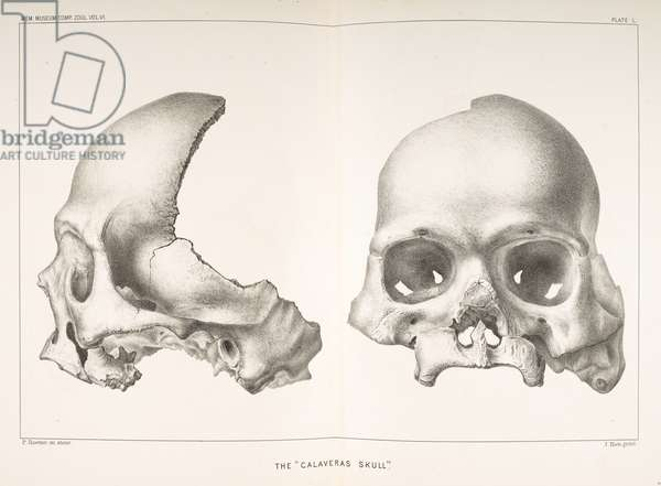 Calaveras Skull illustration from 'The auriferous gravels of the Sierra Nevada of California', by J.D. Whitney, 1879 (litho)