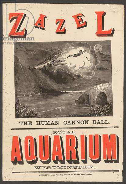 Zazel, the human cannon ball. Royal Aquarium, Westminster. Zazel is shown in flight from the cannon