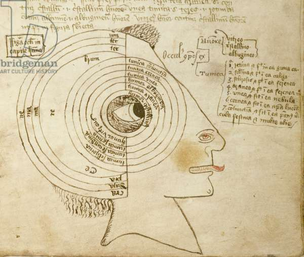 Sloane 981 fol.68 Diagram of the Eye, from a book by Macharias, 14th-15th century (vellum)
