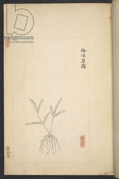 Or 13347 B f.2r Plan from 'Du Cao (Poisonous Plants)' (ink & colour on paper)