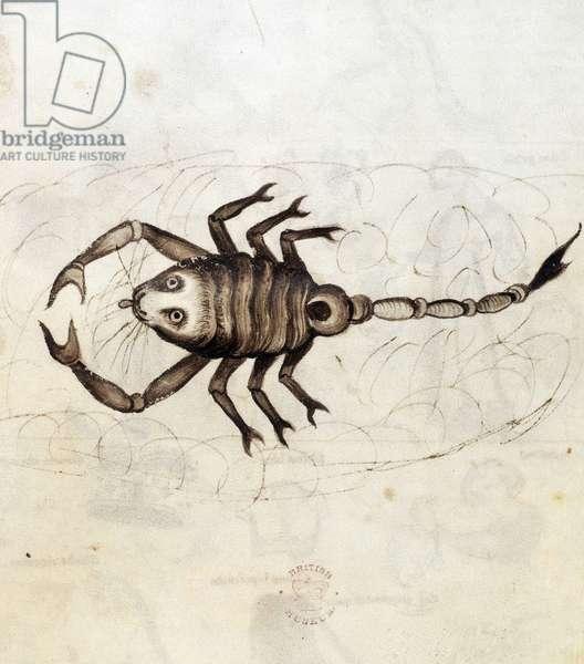 Sloane 3983. Folio No: 23 The zodiac sign Scorpio (vellum)