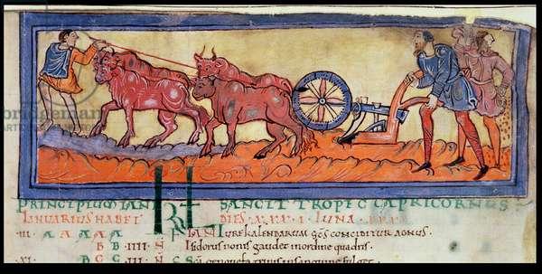 Cott Tib B V f.3 Ploughing, from a Calendar, c.1030 (vellum)