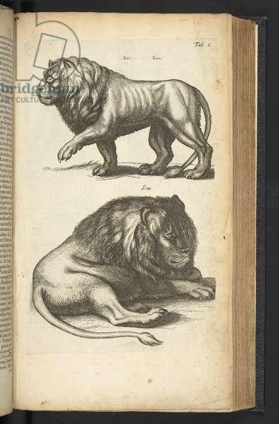 Tab L, Lions, illustration from 'Historiæ naturalis de quadrupetibus', 1657 (engraving)