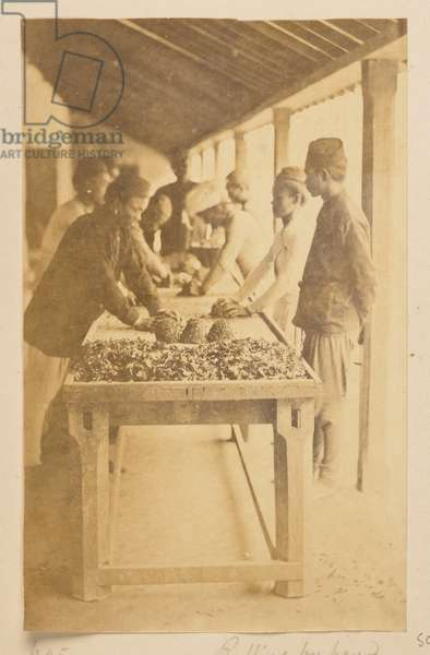 Manufacture of tea at Darjeeling. Rolling by hand, from 'Views of Darjeeling', 1870s (b/w photo)