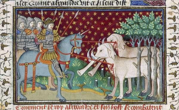 Knights attacking elephants, from the 'Shrewsbury Talbot Book of Romances', c.1445 (vellum)