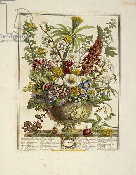 Various flowers (December)