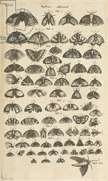 Tab. IV, Butterflies and Moths, Illustration from from 'Historiæ naturalis de quadrupetibus', 1657 (engraving)