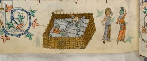 Add 42130 f.163v Sheep in pen being milked; women walking away bearing vessels, from the 'Luttrell Psalter', c.1325-35 (vellum)