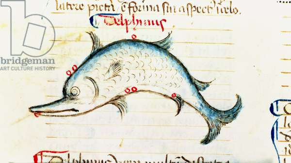 Ms Add 41600 fol.49v The constellation of the dolphin, Astrological Extracts from the Liber Introductorius by Michael Scot, c.1454 (vellum)