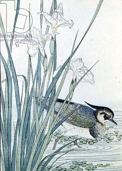 Bird and fringed irises by Imao Keinen (1845-1924), 1891