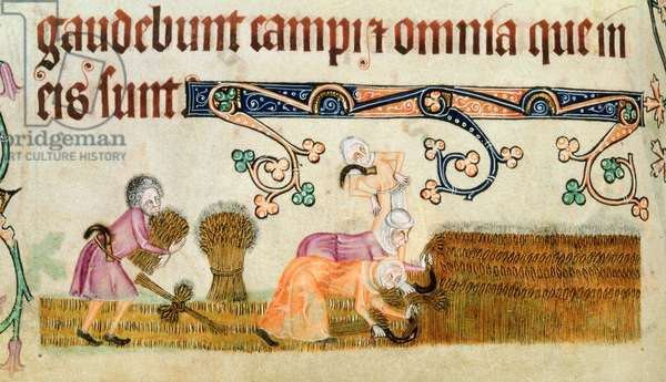 Add 42130 f.172v Peasants harvesting, begun prior to 1340 for Sir Geoffrey Luttrell (1276-1345), Latin (vellum)
