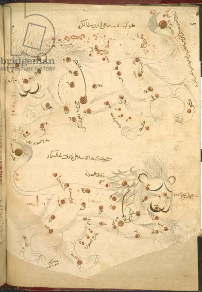 Or 5323 f.45v Two lions, illustration from 'A description of the fixed stars', by Abd al-Rahman al-Sufi (ink & colour on paper)