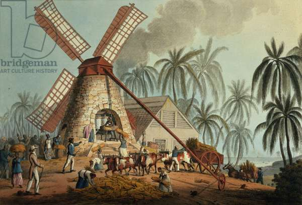 The Crusher Squeezes Juice from the Cane, Antigua, 1823 (print)
