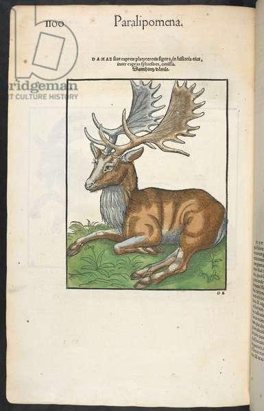 Paralipomena'. A reindeer.