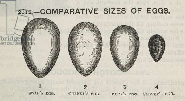 Eggs, from 'The Book of Household Management', by Isabella Mary Beeton, 1892 (engraving)