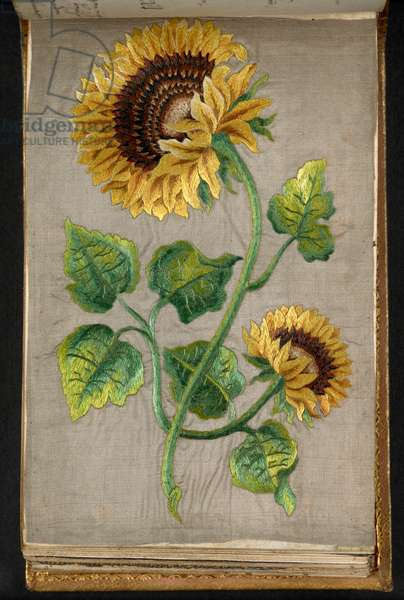 A Sunflower, from the Album of Magnus Weickmann of Hersbruck, containing autograph inscriptions of students and others, 1739-1755 (silk)