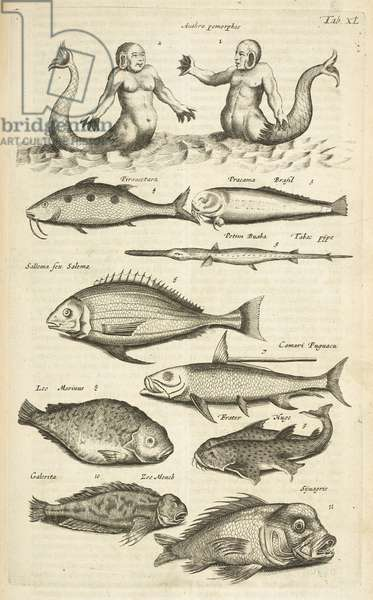 Tab XL, Anthropomorphos; Mermaid; Merman; Tropical Fish, Illustration from from 'Historiæ naturalis de quadrupetibus', 1657 (engraving)
