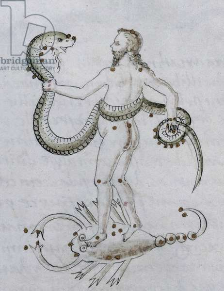 Detail d'une page de manuscrit d'astrologie representant un homme debout sur un scorpion et tenant un enorme serpent. 15eme siecle.  The British Library Institution Reference: Shelfmark ID: Add 15819. Folio No: 9v (detail) Man standing on a scorpion with a large snake in his grasp, 15th century. Sheet from a manuscript formerly belonging to Francisco, son of Tomaso Sassetti, of Florence. ©The British Library Board/Leemage