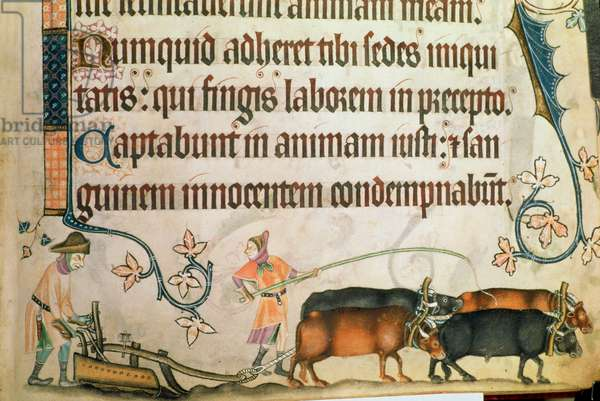 Add 42130 f.170 Man ploughing with oxen, from the 'Luttrell Psalter', c.1325-35 (vellum)