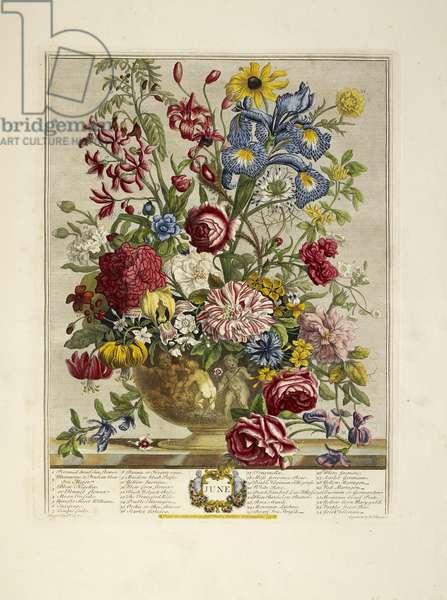 Various flowers (June)