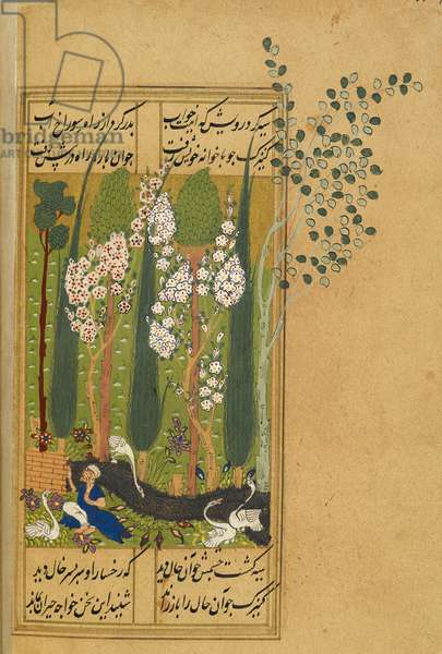 A garden scene, with four swans and a man in a distressed state.