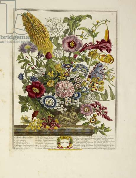 Various flowers (August)