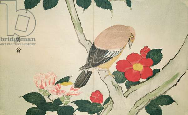 Warbler and peonies by Masayoshi Kitao (1761-1816) 1789, (taken from a mirror)