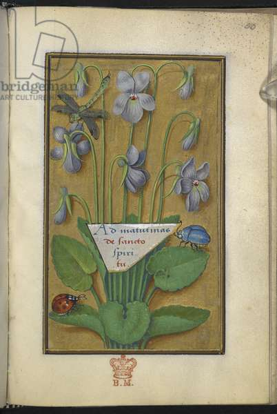 Add 35214 f.50 Violets, Floral decorations, from Hours of the Virgin, Paris, 1515-20 (vellum)