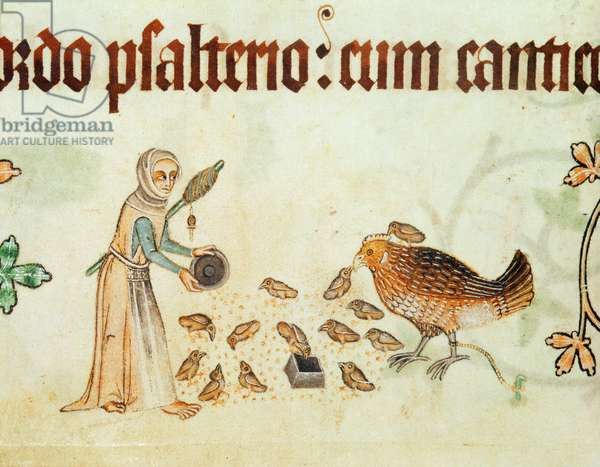 Add 42130 f.166v Women throwing corn to hens and chickens, from the 'Luttell Psalter', c.1325-35 (vellum)
