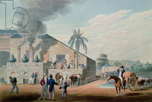 Slaves Set to Work Producing Rum at the Distillery, Antigua, 1823 (print)