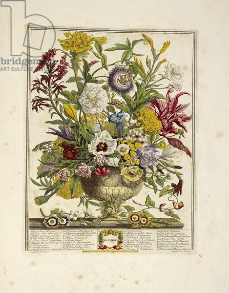 Various flowers (September)