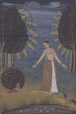 'Kakubha Ragini':a lady stands in a glade feeding two peacocks, Lucknow, Provincial Mughal, from a series i-viii from a Johnson Album no.30, c.1780 (gouache and gold on paper)