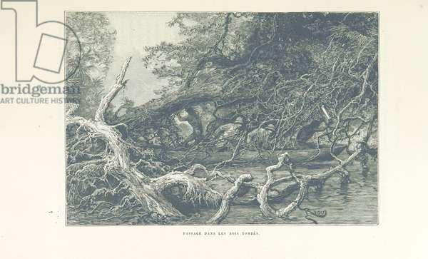 Passage dans les bois tombés, from 'Chez nos Indiens. Quatre années dans la Guyane française, 1887-1891', 1893 (engraving)