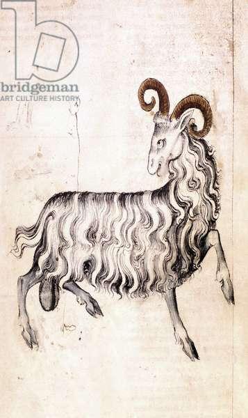 Sloane 3983 f3v The zodiac sign Capricorn (vellum)