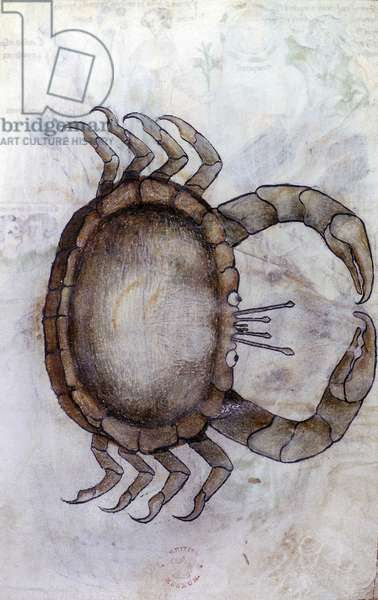 Sloane 3983 f.14v, A crab, zodiac sign for Cancer, 14th century (vellum)