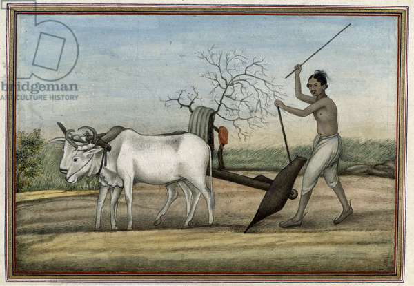 Man ploughing with oxen