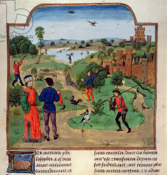 Add 19720 f.272v Hunting birds, from the 'Croissens Manual of Agriculture, (late 15th c.)' (vellum)