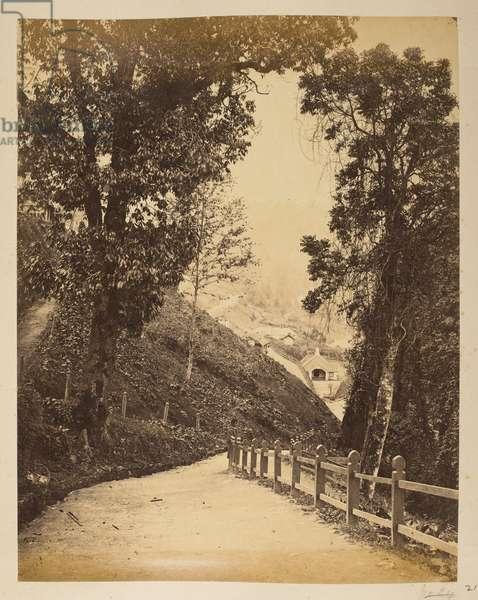 On the road below the Club, [Darjeeling].Photographer: Phillips, Robert1870'sViews of Darjeeling