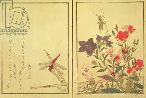 Chinese ballon flower and reptiles and flowers, from an illustrated book on flowers, insects and reptiles, ('ehon Mushi Erami'), (colour woodblock print)