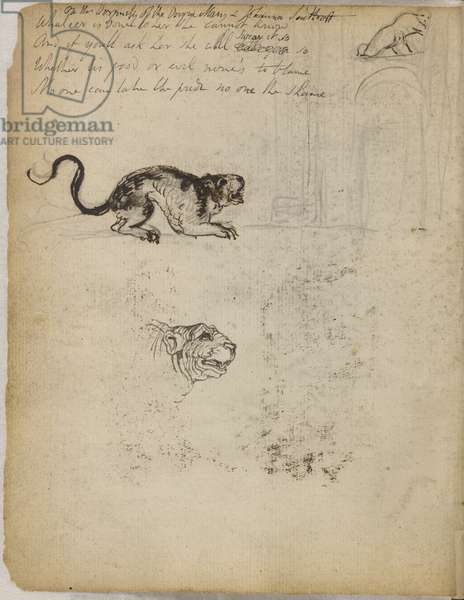 Sketches of a tiger