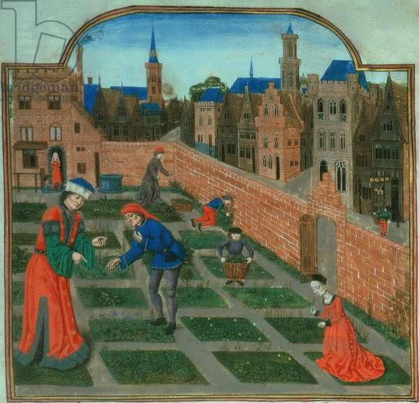Add 19720 f.165 A walled town garden, from 'Livre des Profits Ruraux' by Pietro de Crescenzi (1230-1320) (vellum)