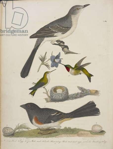 1. Mocking bird. 2. Egg. 3&4. Male and female humming bird.5. Towhee bunting. 6.Egg.